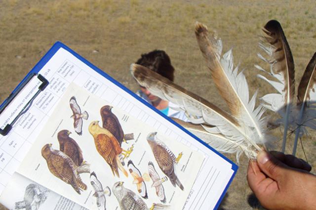 Орнитологи определяют вид и ценность погибших птиц