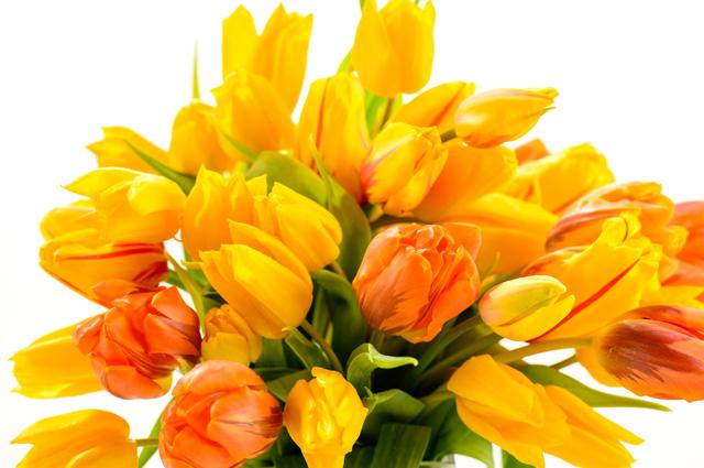 Букет тюльпанов.