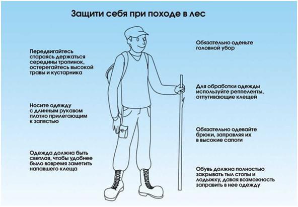 Инфографика клещи