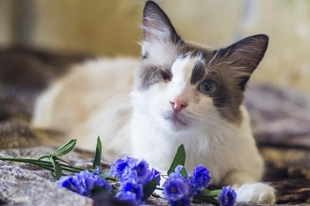 Одноглазый кот Тимофей по-прежнему верит людям.
