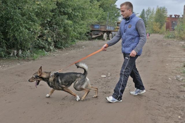 Для Романа Шустова каждые выходные начинаются с посещения приюта.