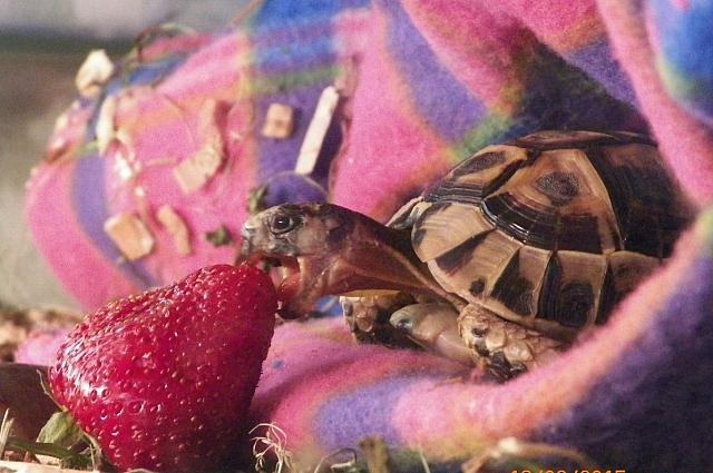Для Марины черепахи - как дети.