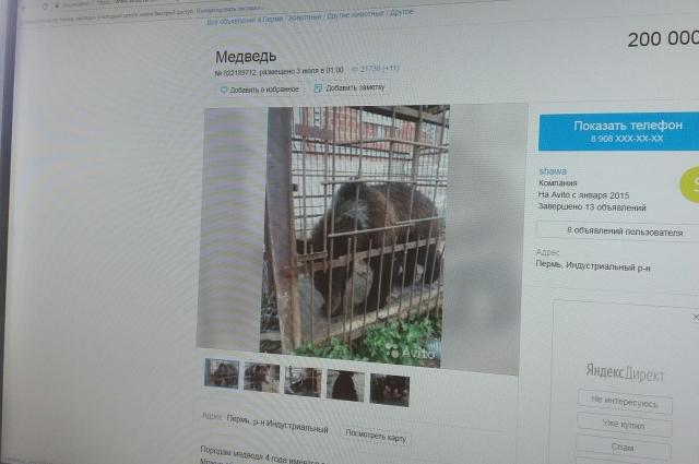 К объявлению хозяин прикрепил старые фото, когда медведь был ещё забавным медвежонком.