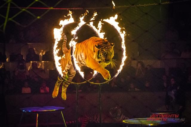 дрессировщица цирк новосибирск