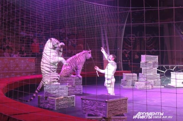 У каждого тигра свой характер.