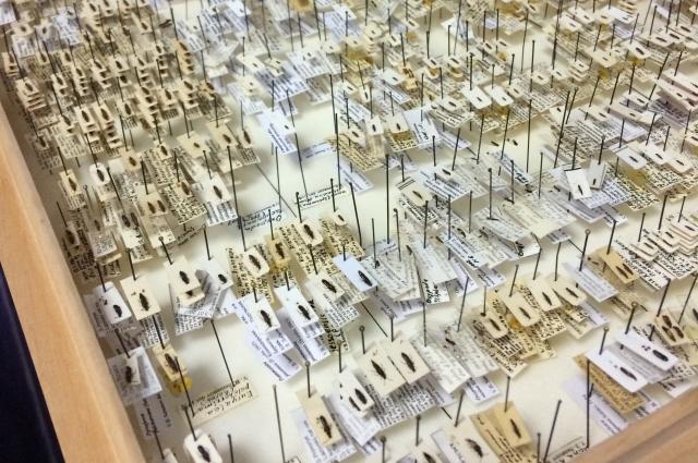Смоляне смогли увидеть богатейшую коллекцию тараканов.