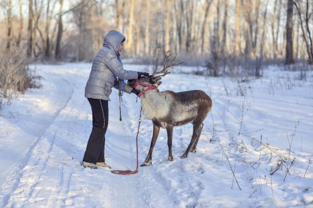 Снежку легко отличить об обитателей оренбургских степей.