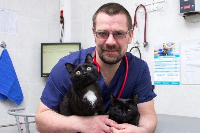 Игорь Пасиченко и два его кота — Саймон и Кузя.