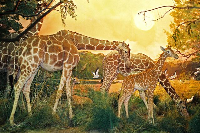 Посетители видят животных в их природной обстановке.