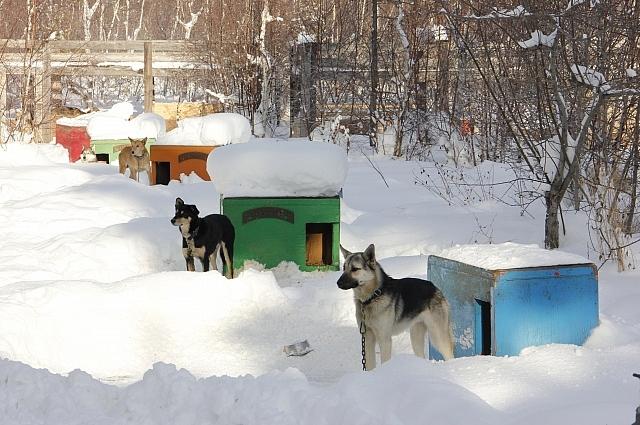 В усадьбе собаки живут в отдельных домиках.