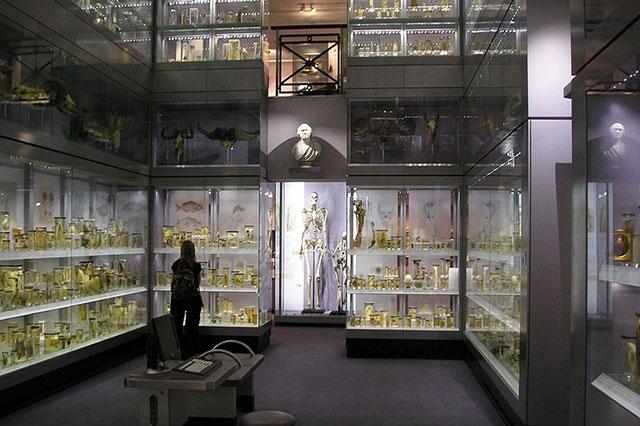 Скелет Чарльза Бирна в Хантеровском музее в Лондоне.