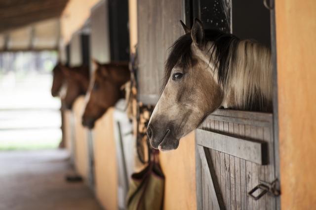В деннике лошади очень комфортно.
