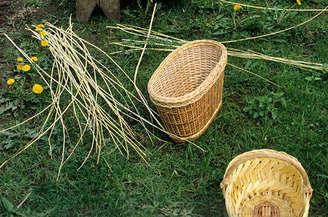 Лоза для плетения.