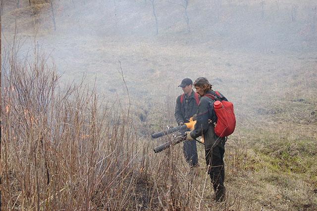 Из года в год лесные пожары приобретают катастрофический масштаб.