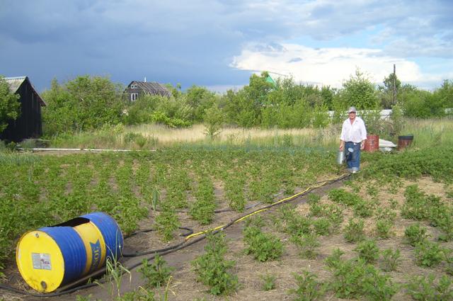 Основные цели Николая Жигайлова: сохранять влагу и почвенное плодородие.