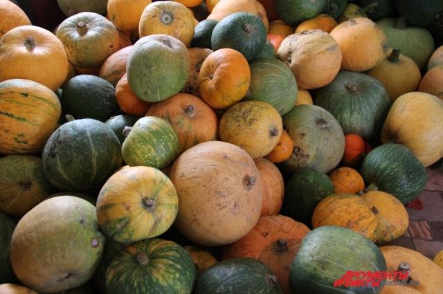 Кроме картофеля, моркови, черной редьки, капусты и свёклы, фермер выращивает вот такие яркие тыковки.