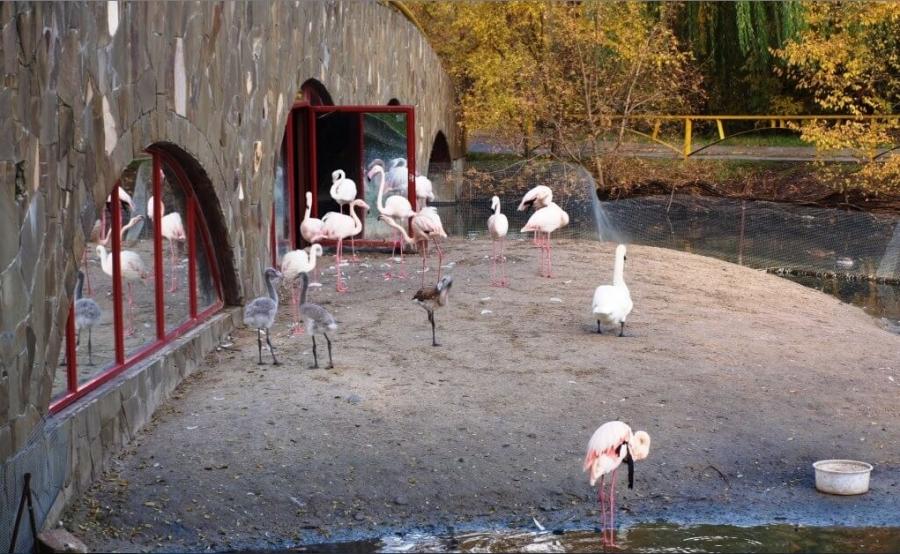 Зеркала создают иллюзию большего скопления птиц