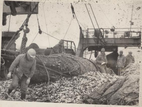 В прошлом тралы были самыми простыми - из пеньки и сизаля, они быстро выходили из строя.