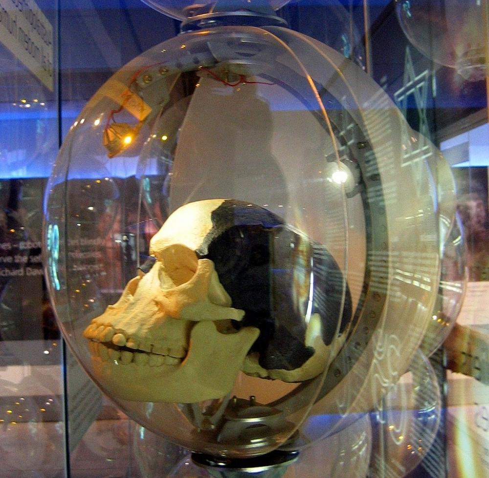 Копия черепа «пилтдаунского человека»