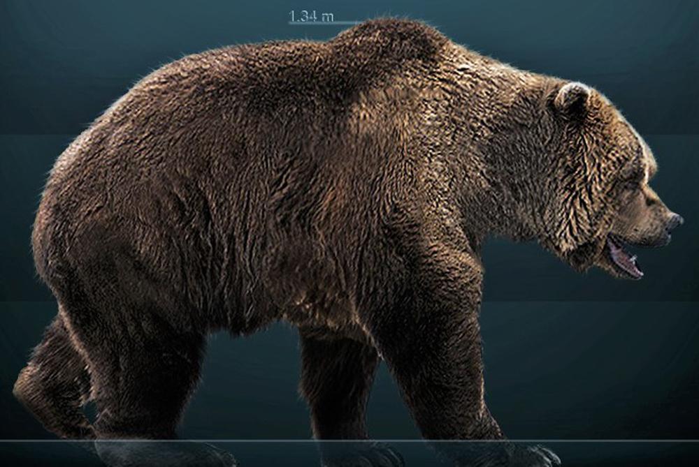 Реконструкция пещерного медведя.