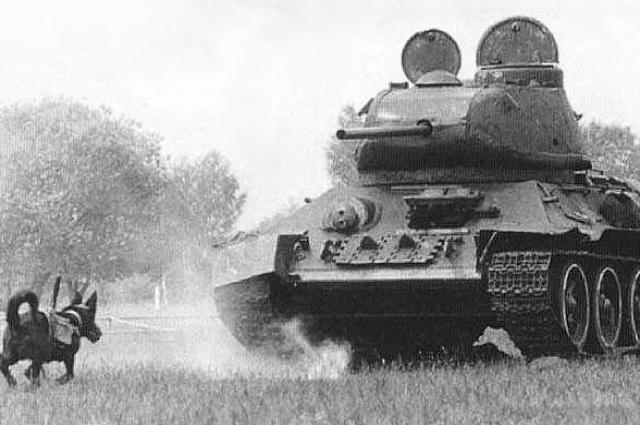 Четвероногие бойцы бросались прямо под вражеские танки и подрывали их.