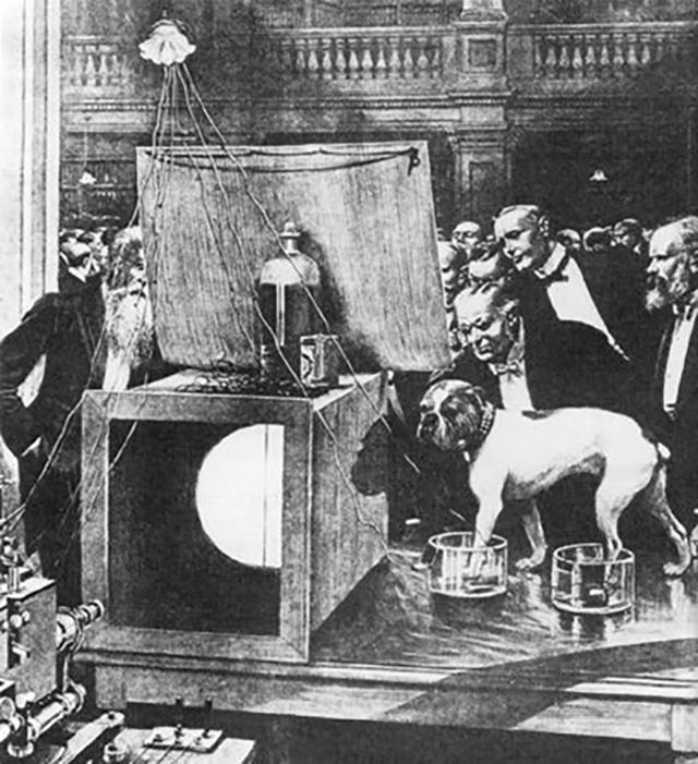 Ученый Лондонского Королевского общества измеряет ритм сердца своего бульдога Джимми (1889 год).