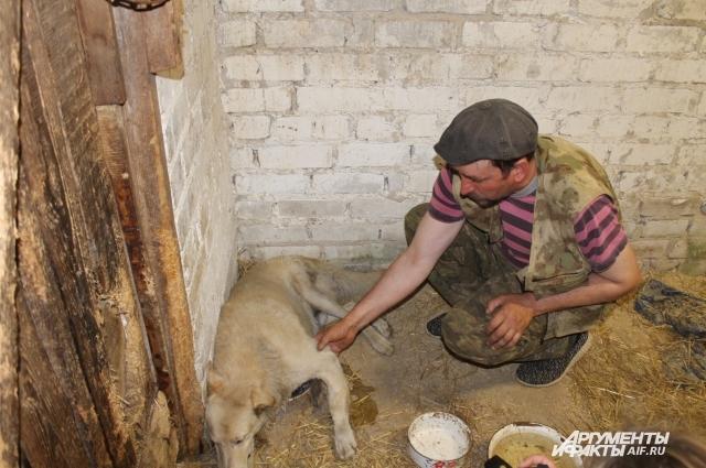 Больные, обиженные на жизнь собаки далеко не сразу понимают, что им хотят помочь.
