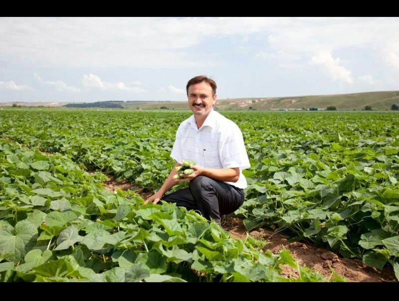 В КФХ Василия Семёнова урожай - на загляденье!