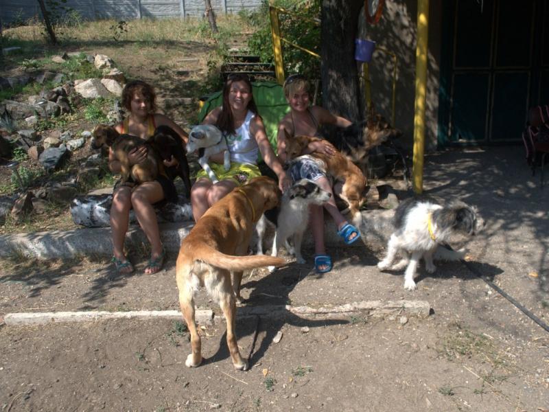Ольга и её друзья любили все вместе гулять с собаками