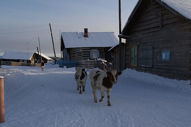 В советские годы здесь процветал совхоз, а коровы, откормленные на местных заливных лугах, давали отличное молоко