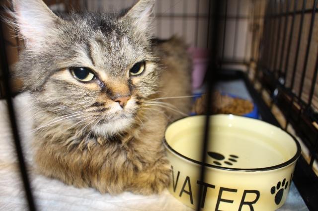 Поступившие в приют коты находят здесь тёплый дом, полную миску корма и лечение.