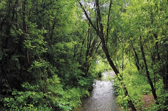 В логу, в нескольких метрах от цивилизации, раскинулись настоящие пермские джунгли.