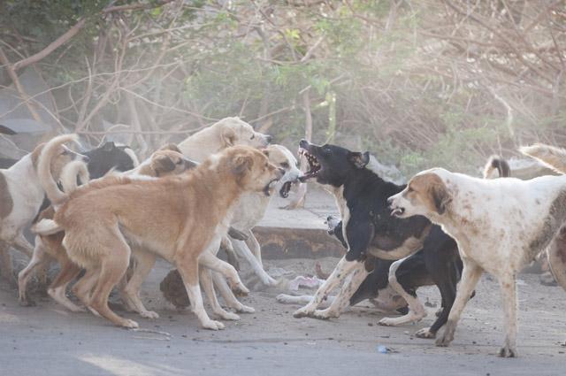 Собаки, бешенство