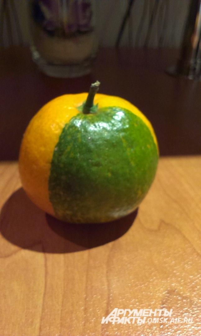 Такой мандарин омичка купила в супермаркете.