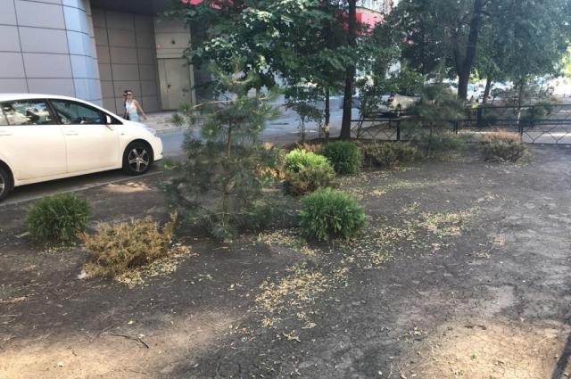 Ростовчане также заметили, что в городе начали исчезать зелёные насаждения, которые посадили к началу чемпионата.