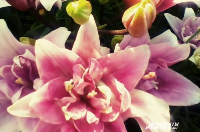 Елена Сухова любит выращивать цветы.