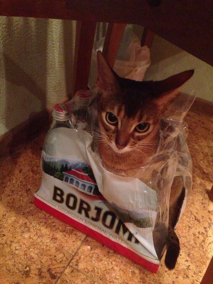 Кошка Челси