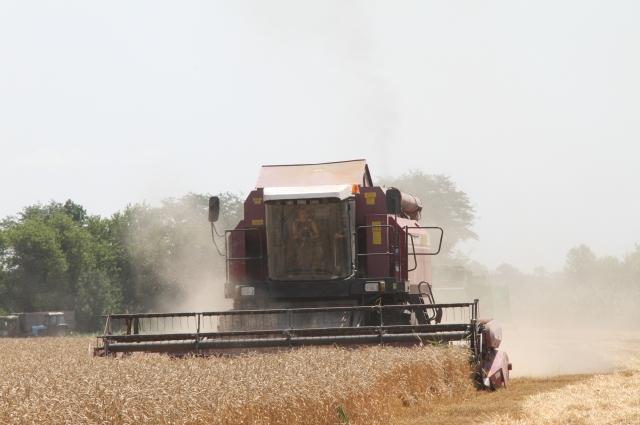 В Омске собрали большой урожай, но продать его не могли.