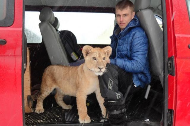 Волонтер перевез Бонни из Новгорода в Ленобласть.