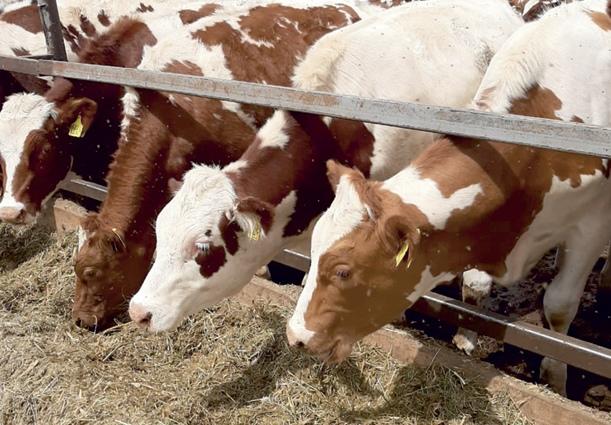 У большинства сельхозпредприятий Брянщины собственная кормовая база.