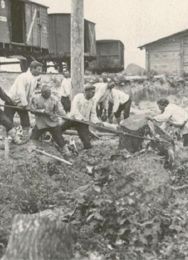 Корчёвка пней на строительстве Брянской ГРЭС. 1928 год.
