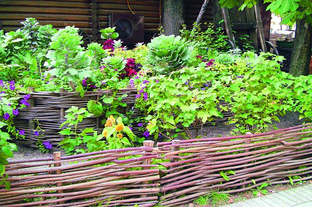 «Декоративный огород» (издательство «Фитон XXI»)