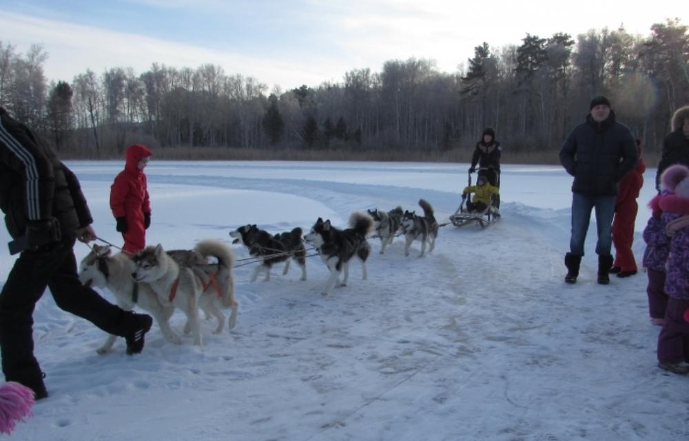 Катание на собачьих упряжках - отличный способ провести время зимой.