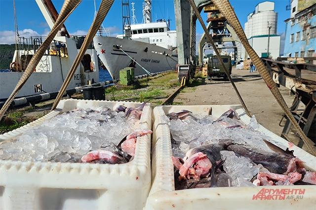 Выгрузка рыбы в порту Мурманска.