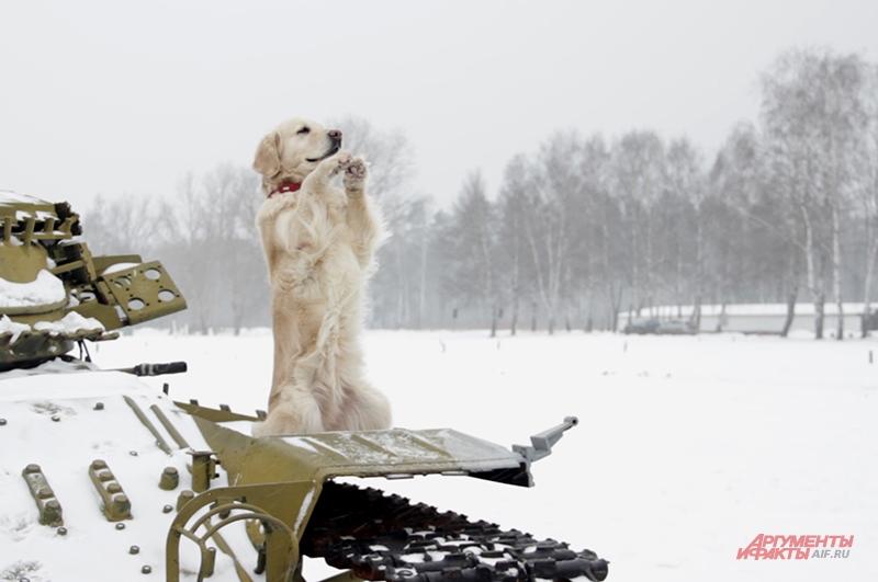 Агата приветствует нас, сидя на танке