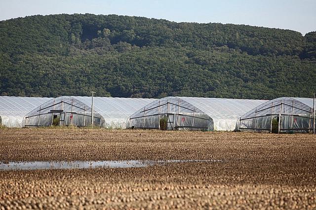 Картофельное поле и теплицы.