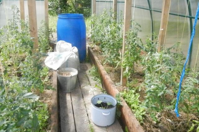 Под кусты помидоров можно лить по три литра удобрения