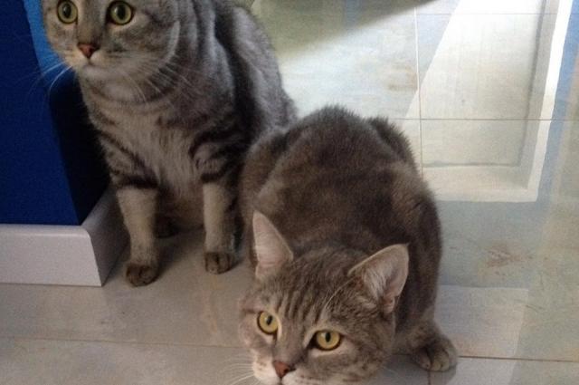 Коты Елены Крекниной