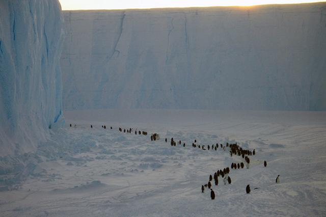 Одна из задач биолога - наблюдать за пингвинами.