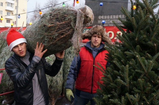 За отдельную плату дерево привезут прямо вам домой.